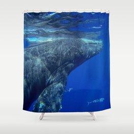 Underwater Humpbacks 12 Shower Curtain