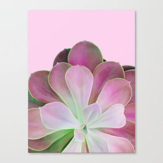 Acid Green and Pink Echeveria Canvas Print