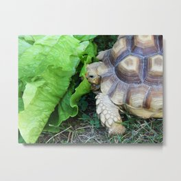Lunch time! Metal Print