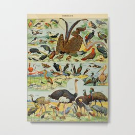 Colourful Birds Vintage Scientific Illustration French Language Encyclopedia Lithographs Educational Metal Print