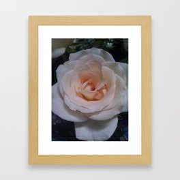 Pale Rose Framed Art Print