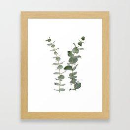 Eucalyptus Branches I Framed Art Print