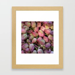 Lotos Flower Framed Art Print