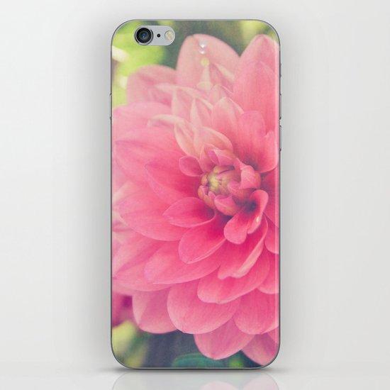 Pink Dahlia iPhone & iPod Skin