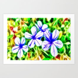 Blue Plumbago flower Art Print