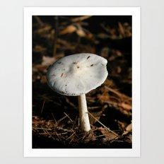 mushroom in the sun Art Print