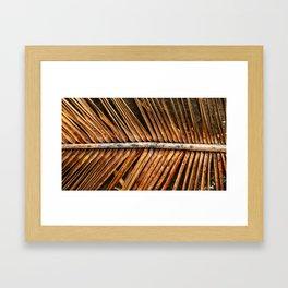 Dried Coconut Palm Framed Art Print
