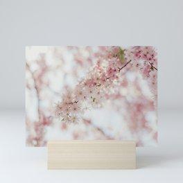 Beautiful pink cherry blossoms after winter Mini Art Print