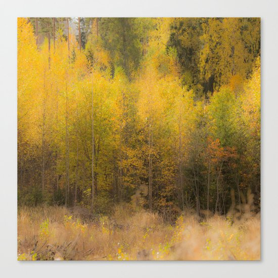 Fall color forest Canvas Print
