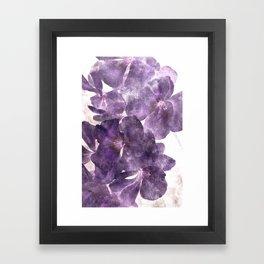 Purple Blossoming Framed Art Print
