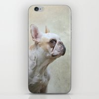 french bulldog iPhone & iPod Skins featuring French bulldog  by Pauline Fowler ( Polly470 )