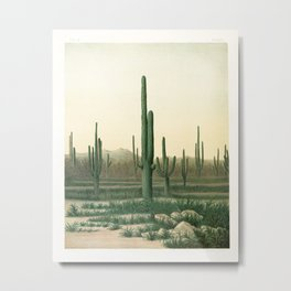 Arizona cactus grove (1871) Metal Print