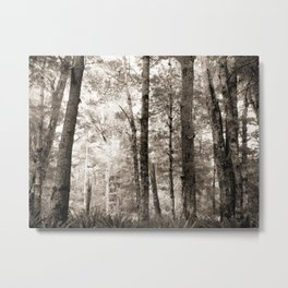 Birch Forest 2 Metal Print