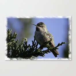 Ruby-Throated Hummingbird Canvas Print
