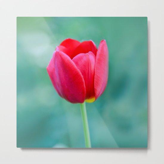 Pink Tulip, Spring Garden Flower Metal Print
