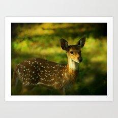 Indian Deer Art Print