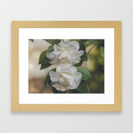 Romantic White Vintage Flowers, Nature Prints, Flower Photography Framed Art Print