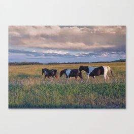 Sunset Horses Canvas Print