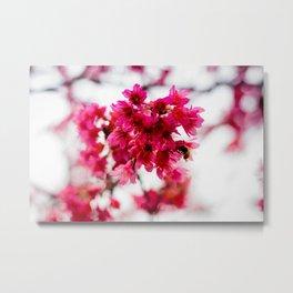 Spring Sakura Metal Print