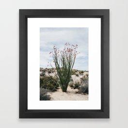 Joshua Tree Ocotillo Framed Art Print