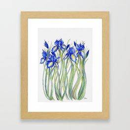 Blue Iris, Illustration Framed Art Print