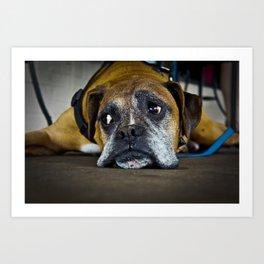 curious doggy Art Print