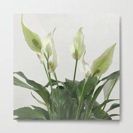 Spathiphyllum Metal Print