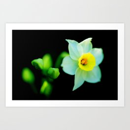 Translucent Flower - Color Version Art Print