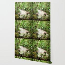 Deep into the Rainforest Wallpaper