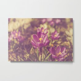 Flowers Crocuses Violet Close-up Spring Matte Metal Print