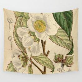 Stewartia sinensis, Theaceae Wall Tapestry