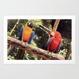 couple of macaws - casal de araras Art Print