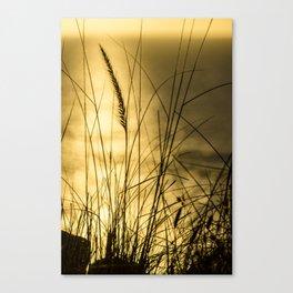 Golden Herbs Canvas Print