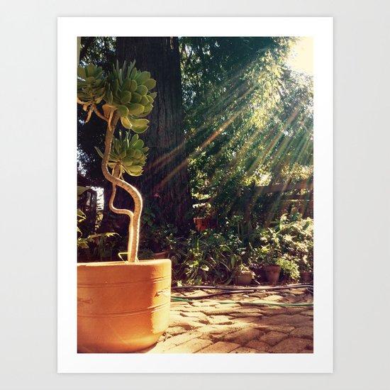Sunshine on succulents Art Print