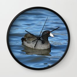 American Coot Wall Clock