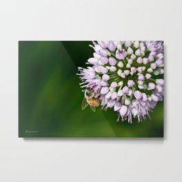 Honey Bee And Lavender Flower Metal Print