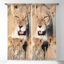 Majestic Gracious Female African Lion Mother With Two Cubs In High Grass Close Up Ultra HD Blackout Curtain