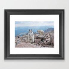 Friends at 14,000 Ft. Framed Art Print