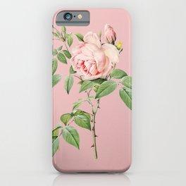 Vintage Blooming Fragrant Rosebush Botanical Illustration on Pink iPhone Case