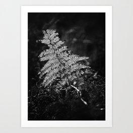 Contre-jour - 04 Art Print