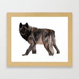 Black Wolf in the Snow Framed Art Print