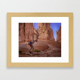 Tree in Bryce Canyon Framed Art Print