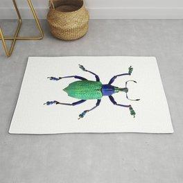 Eupholus Weevil Beetle Rug