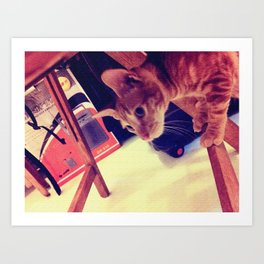the ACO CAT Art Print