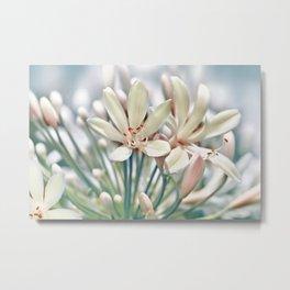 Sumer flower macro 036 Metal Print