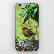 Robin in the spring iPhone & iPod Skin