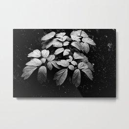 Monochrome Droplet Metal Print