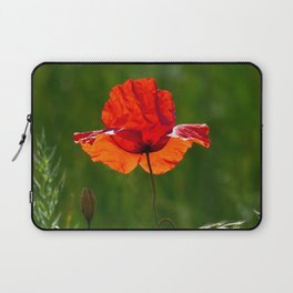 Red poppy in summer Laptop Sleeve