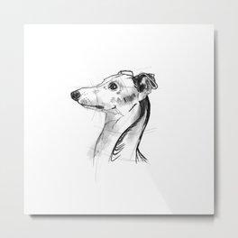 Italian Greyhound Sketch Metal Print
