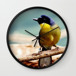 Blue Crowned Laughingthrush Wall Clock